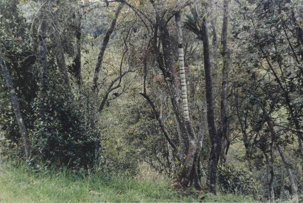 2003-16 1